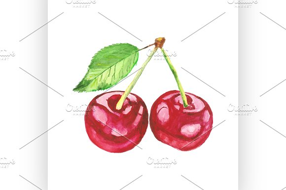 cherries. Vector watercolor painting - Illustrations