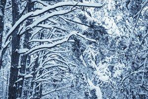 Winter nature background.