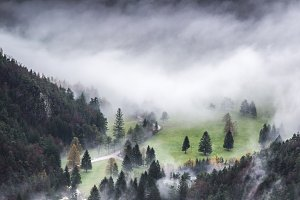 Dark and Mystic Forest in Autumn