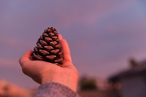 Closeup Of Woman Holding Pinecone