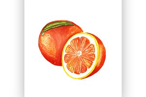 orange. Vector watercolor painting