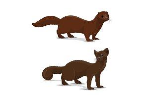 Sable and mink cartoon vector animal