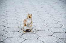 A curious squirrel posing on by  in Animals