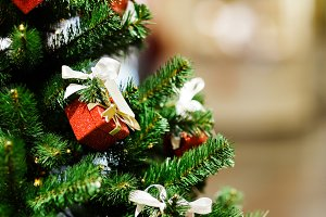 Image of decorated Christmas spruce
