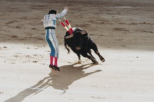 Spanish bullfight. The enraged bull