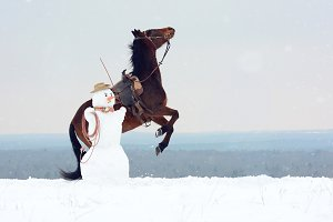 Snowman and horse - Christmas story
