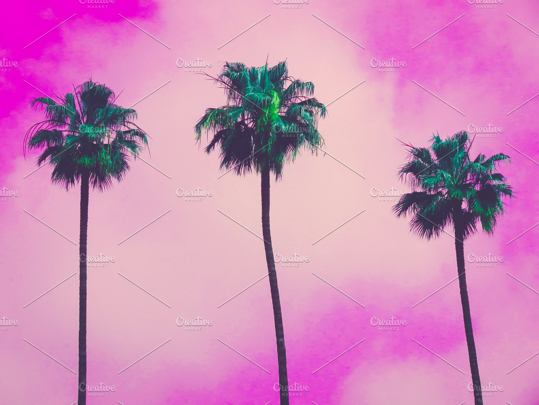 Pictures Of California Palm Trees