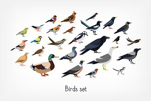 Different birds set