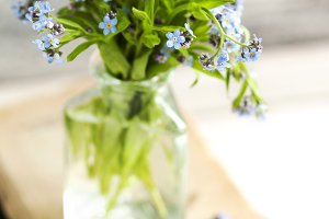 Wild forget-me-not flowers