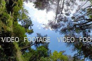 Rainforest Landscape Indonesia