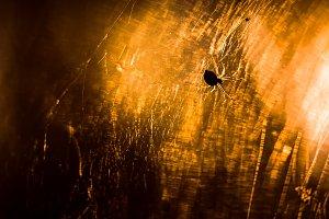 spider is sitting on a cobweb close-