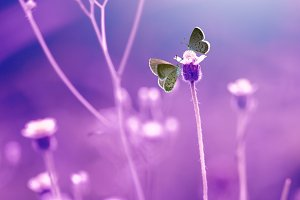two butterflies above flowers