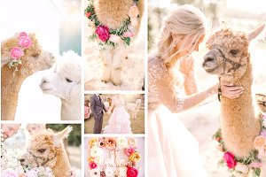 Alpaca wedding stock bundle