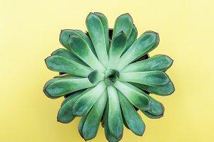 Plant, succulent.  Minimalism , View