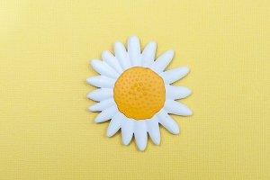 Chamomile, flower, symbol of spring