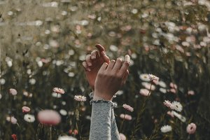 Hands in a field of flowers