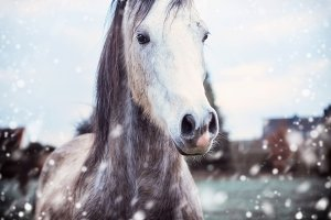 Horse at winter