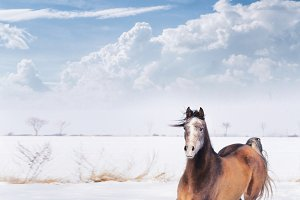 Playful horse in winter snow