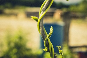 fresh bio bean