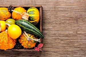 Diverse assortment of pumpkins