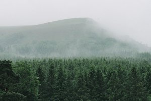 Mountain and forest in fog