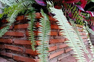 brick planter with coleus and ferns