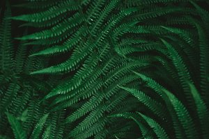 A photo of a fern