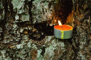 Candle and tree bark