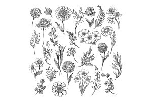 Vintage flower and herbs sketch