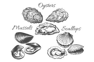 Oysters and scallops sketch