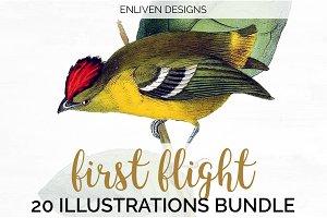 Watercolor Bird Bundle Volume 2 (20)