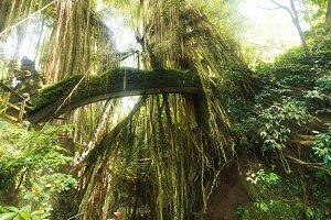 Tropical exotic rain Sacred Monkey f
