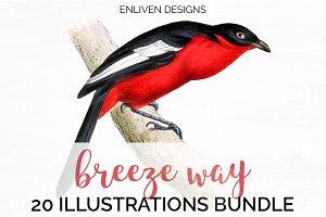 Bird Watercolor Vintage Bundle (20)