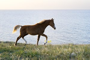 Running horse in front of the sea