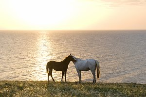 Two horses at the sunset