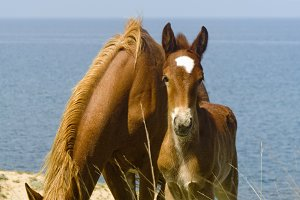 Mare and foal near the sea