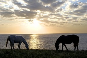 Two horses in front of the sea