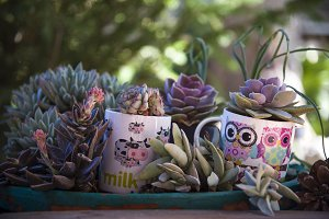 planter with cups with succulents