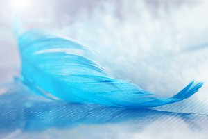 Closeup of blue feather on blurred b