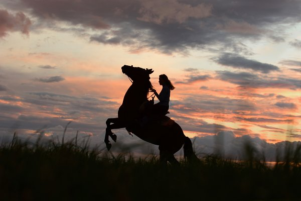 Sports Stock Photos: Concept & Horses - Colorful sunset with rearing horse