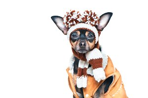 Funny puppy, a dog in a winter hat