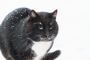 black cat in a winter day on white