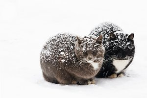 two cats are sitting on the snow in