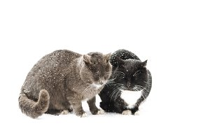 two cats in the winter among the