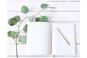 Eucalyptus Notebook - Stock Photo