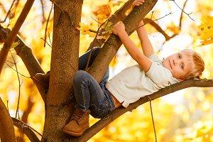 Image of small boy sitting on tree