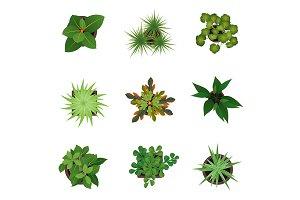 Realistic  Green Plants Set. Vector