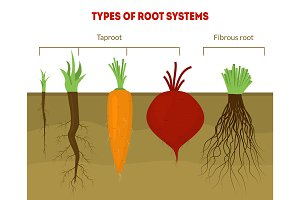 Cartoon Types Root Systems Card