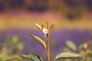 White Snail on a plant