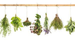 Fresh herbs white background basil